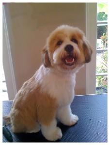 Dog-Grooming-happy-dog